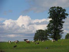 Ganymas - reikalinga veikla atviram kraštovaizdžiui išsaugoti
