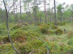 91D0, Pelkiniai miškai