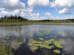 3150, Natūralūs eutrofiniai ežerai su plūdžių arba aštrių bendrijomis (Burgio ežeras)