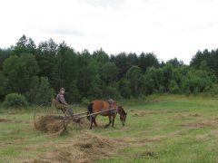 Griežlių buveinių išsaugojimui būtinas ūkininkavimas pievose