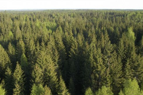Plokštinės miškai