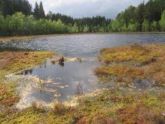 3160, Natūralūs distrofiniai ežerai (Piktežeris)
